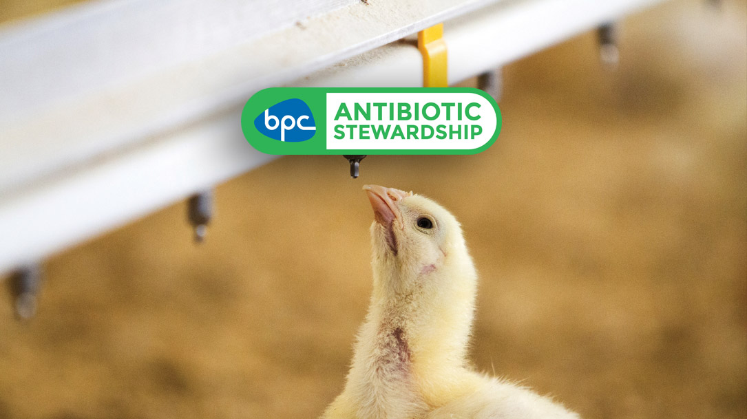 British poultry's successful stewardship on antibiotic use