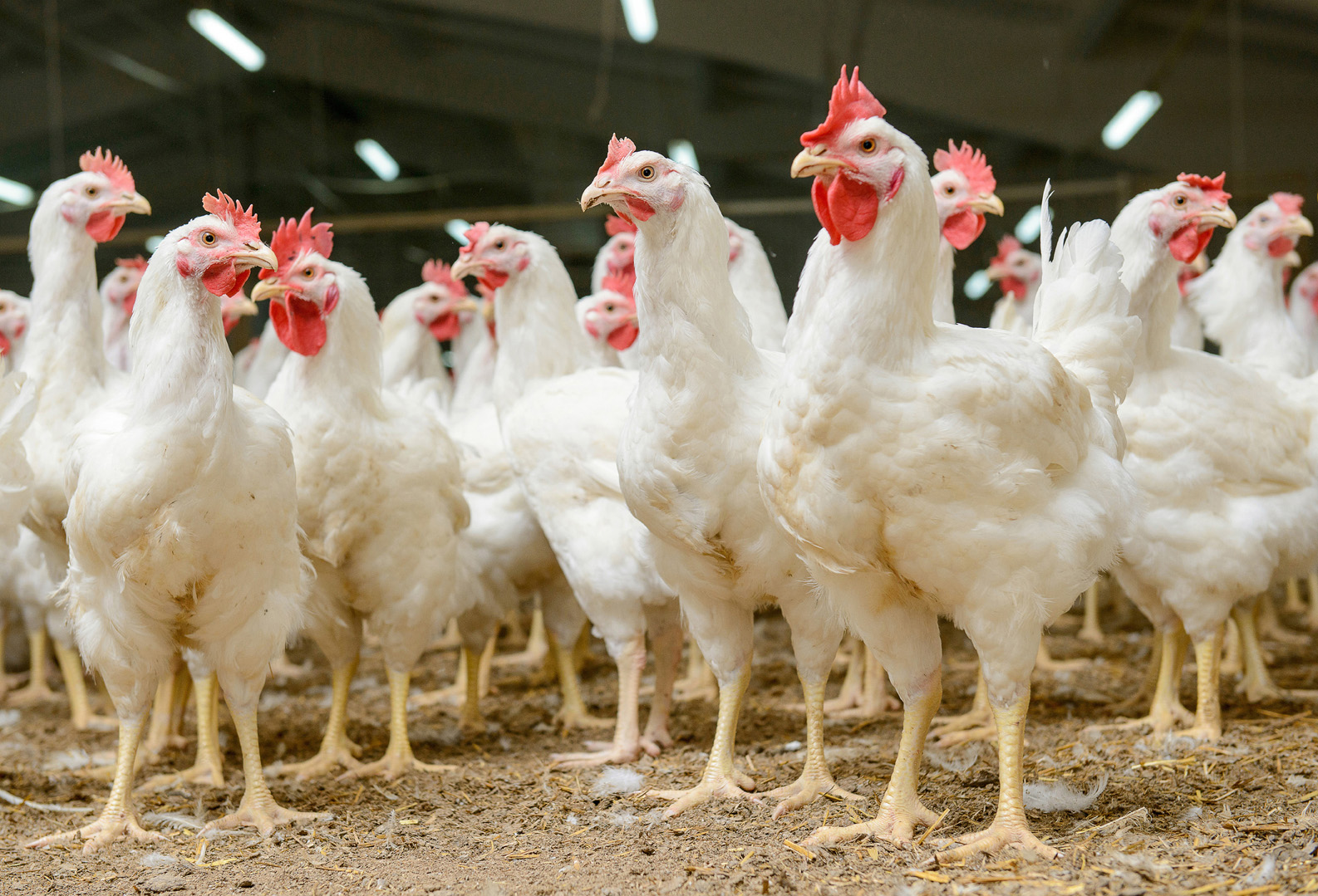 Bird flu roadshows to prepare for future outbreaks
