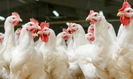 Forcing poultry meat plants to shut down will threaten Britain's food supply